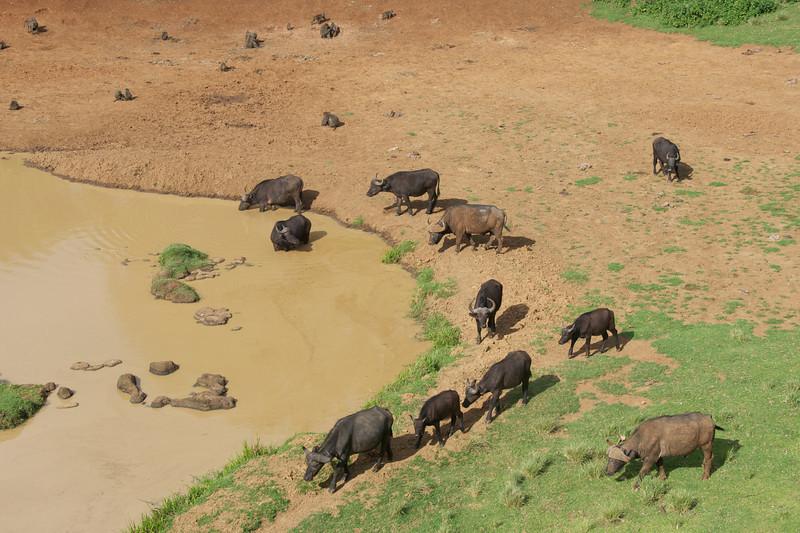 Kenya.Card3.02.2014 496
