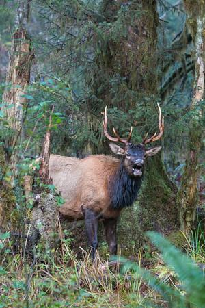 Washington Wildlife