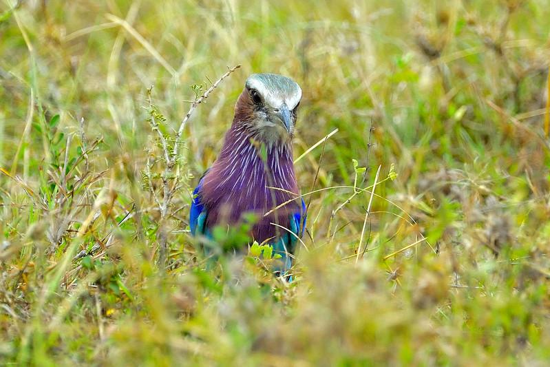 Kenya Aug 2007 039.JPG