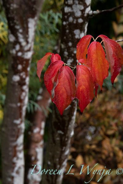 Dietrick fall garden_2057.jpg