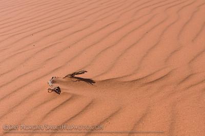 Coral Pink Sand Dunes State Park, AZ