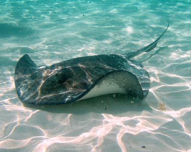 Underwater 2007 cruise