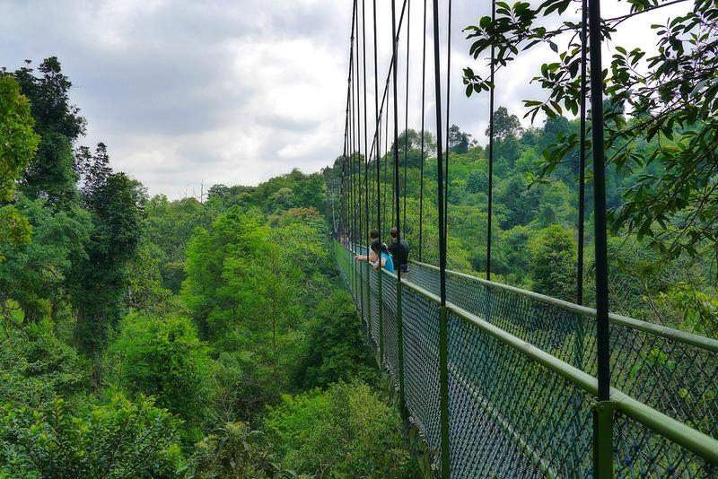 Singapore | TreeTop Walk