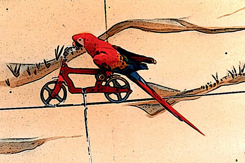 parrot on a bike 5-30-2009.jpg