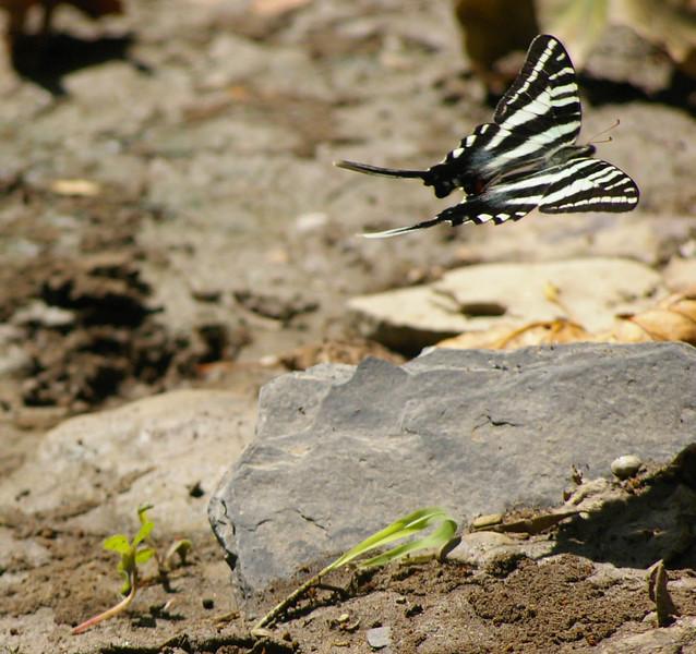 butterflyapalooza 084.jpg