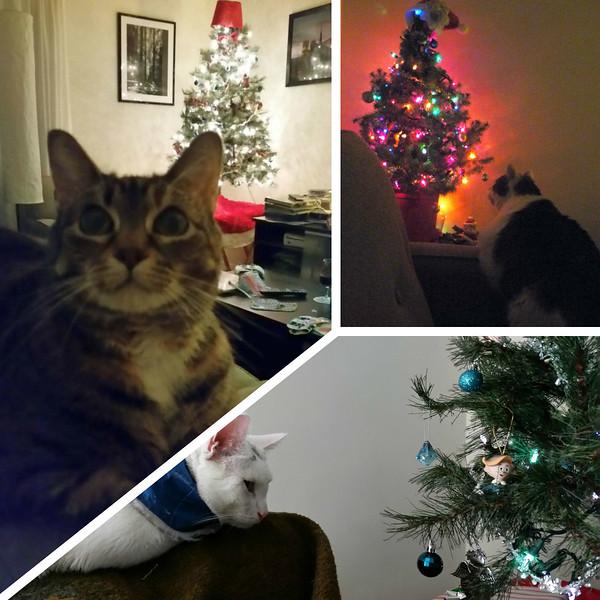 Cat Christmas.jpg