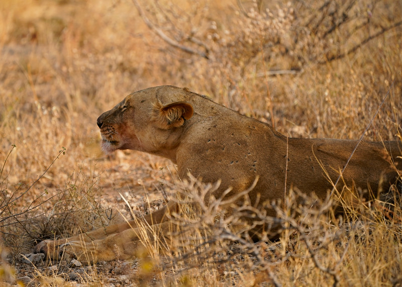 safari-2018-51.jpg
