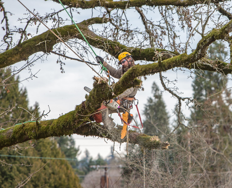 Tree Cutting in Neighborhood - Jan 2018