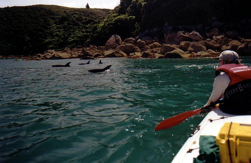 050.DolphinsShore.jpg