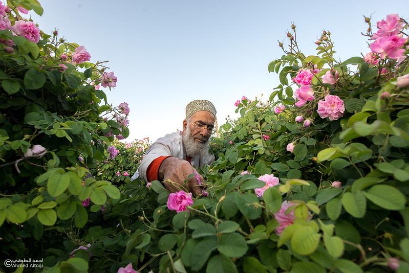 Roses Water (8)-Aljabal Alakhdhar-Oman.jpg