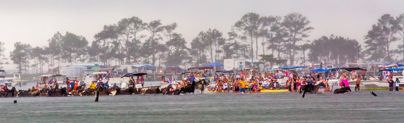 Chincoteague Pony Swim 2013