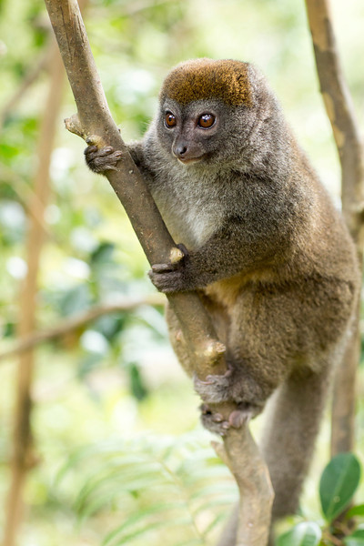 Madagascar_2013_IG3A2352.jpg