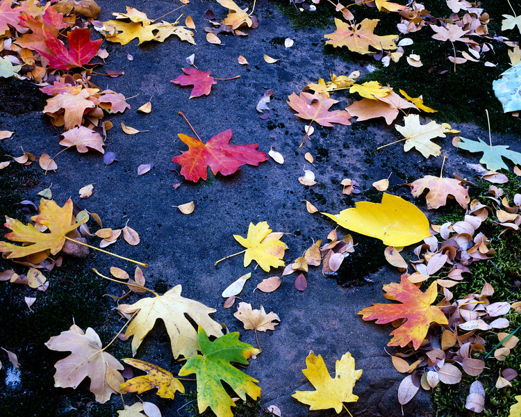 Colorful_Leaves_4x5_PrintReady_Signature-1.jpg