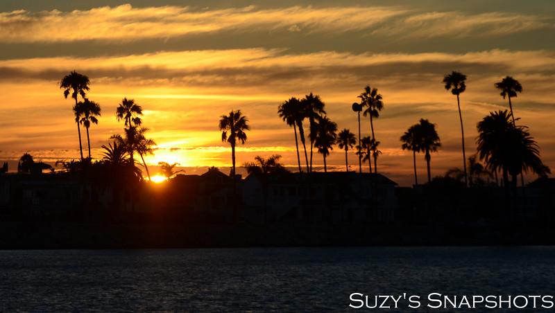 SuzysSnapshots_Mikayla-28 (2).jpg