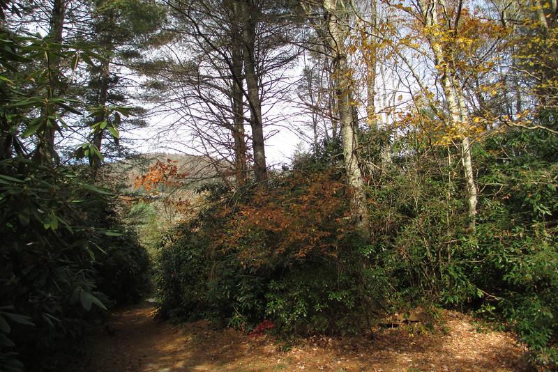 Granny Burrell Falls-Mac's Gap Trail Junction - 3,650'