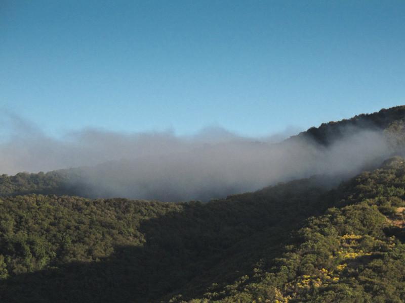 jun7_fog.jpg