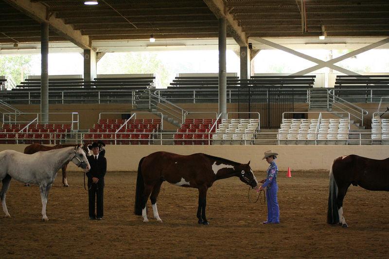 girls with horses.jpg