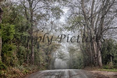 fog 0367 copy