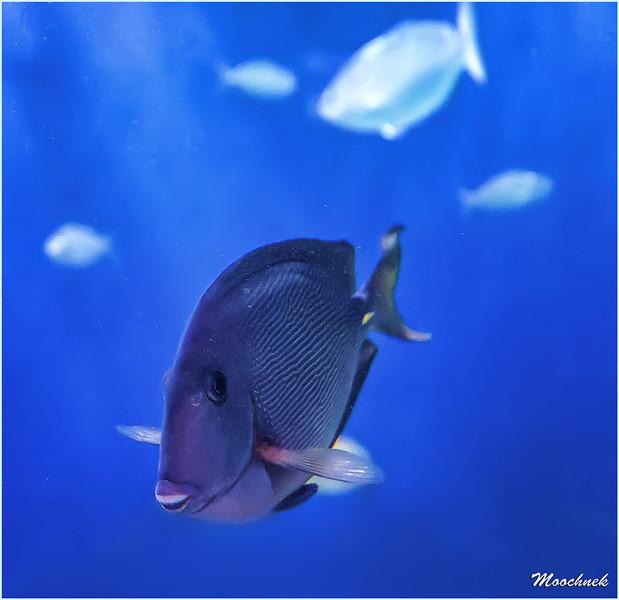 triggerfish1.jpg