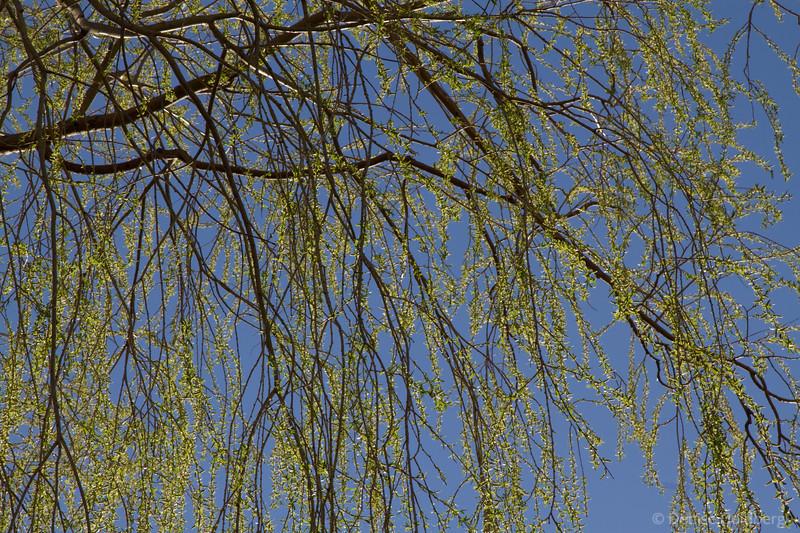 201203_7D_9917aL.jpg