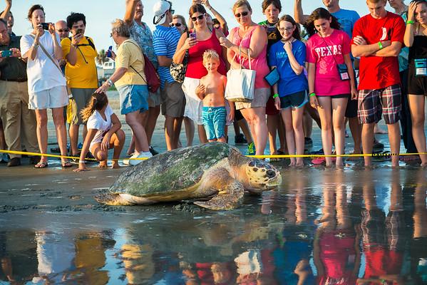 Loggerhead Turtle Release - 7/2013