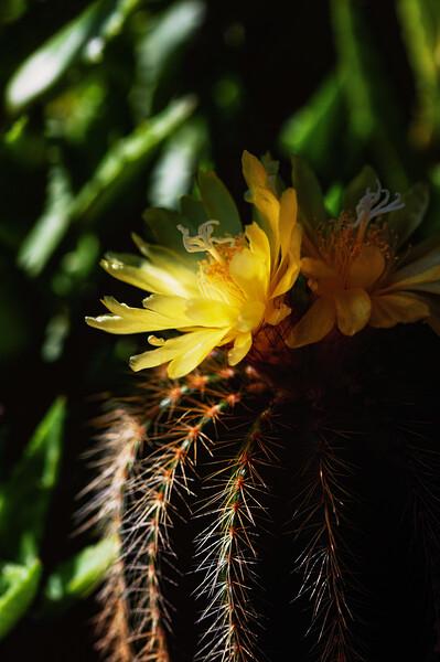 cactus flowers 060520-.jpg