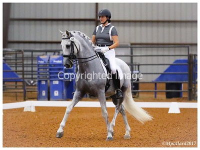 Dressage at Ranch Park - 061817