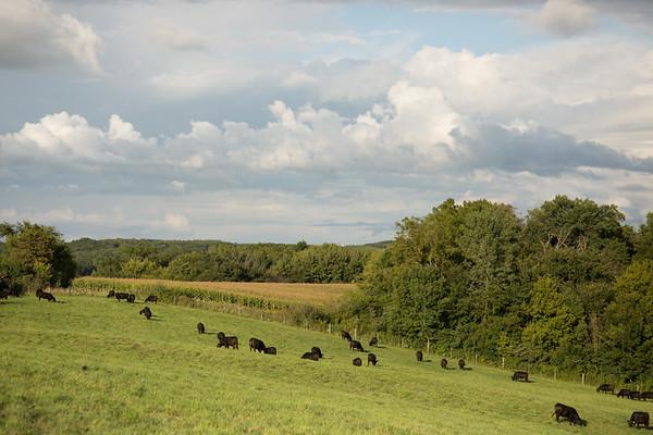 Wallace Farms