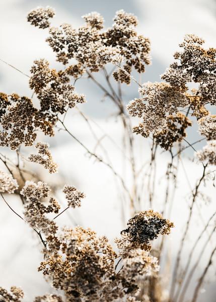 Frosty February