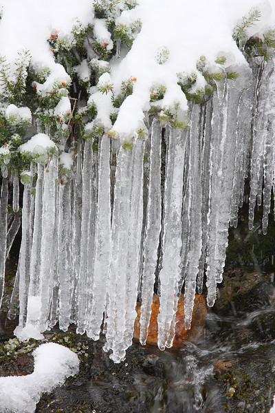 Snow in Paradise 12.JPG