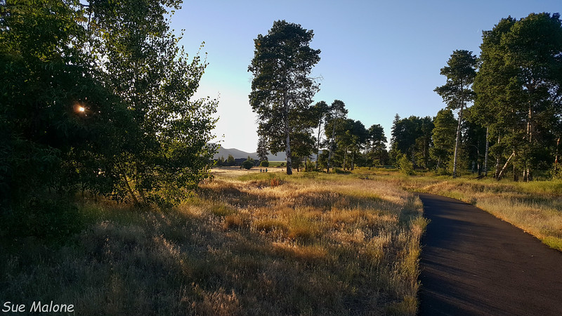 evening walk-12.jpg