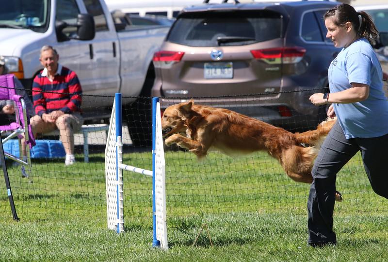 3-31-2018 Shetlant Sheepdog-3727.jpg