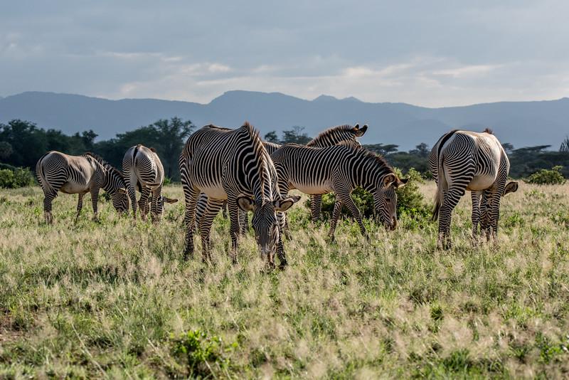 Samburu (9 of 70).jpg