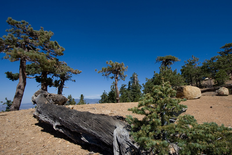 Dry forest, with altitude
