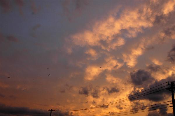 TENNODAI SUNSET - 15 NOV, 2009