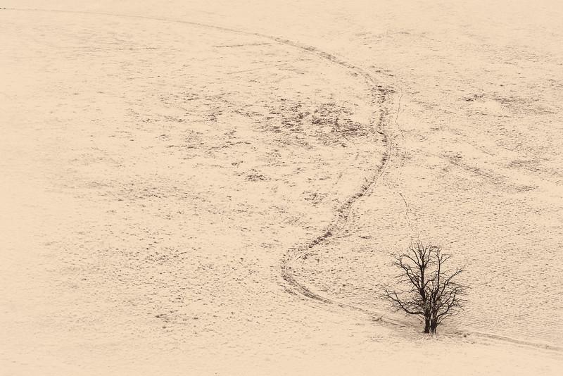 Lance Christianson.Lone Tree.jpg