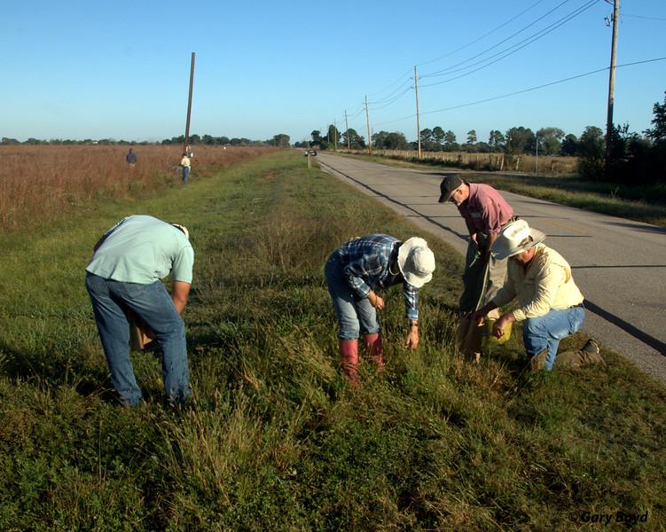 Collecting Knot-root Bristlegrass Along Roadside - Nash Prairie