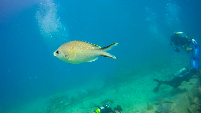 Ciesla-GOPR6747 - KC Whiteish Fish.jpg