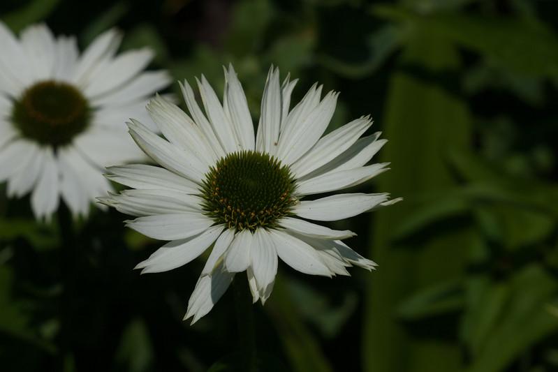 2009 06 30_NY Botanical Gardens_0740.jpg