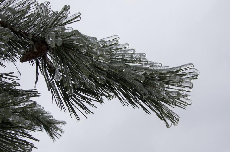 Ice storm winter 2013