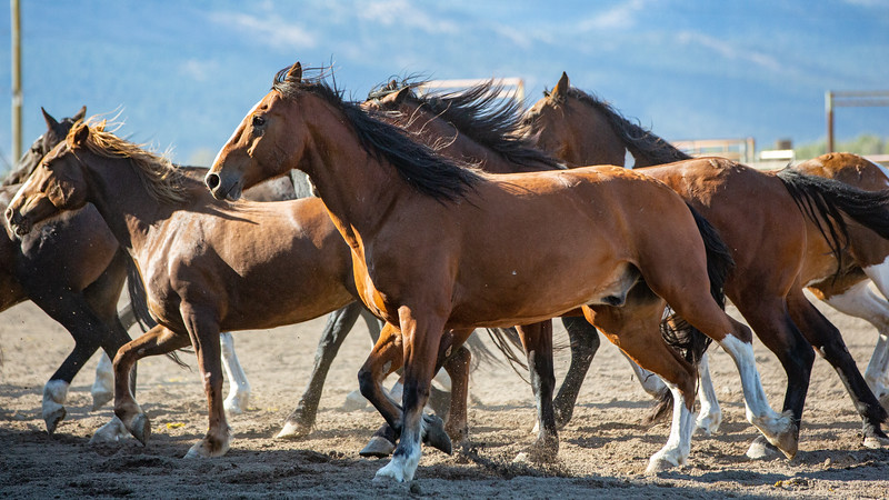 2019 Rodeo 4 (51 of 59).jpg