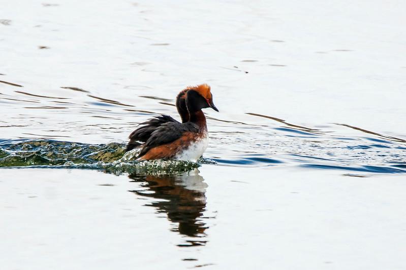 3. It swims so fast - Se ui kovaa...