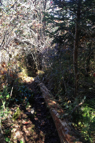 Plott Balsam Manway Trail