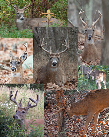 Deer through the stages of life