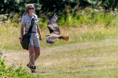Hawk Conservancy 30-06-18