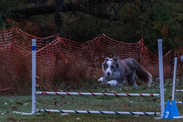 2013-11-02 NADAC Dog Agility at St. Huberts