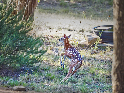 Curious Fawn and Doting Mother