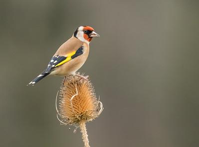 20181123 Woodland Bird Hide - Nr Newport, Shropshire