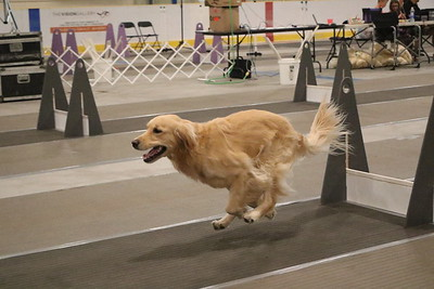 NPP Flyball Tournament