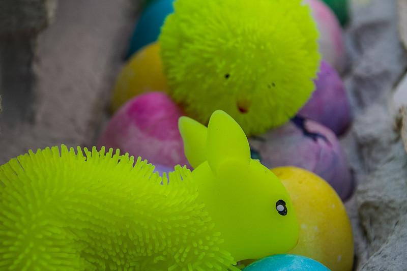 apr 8 - bunnies.jpg